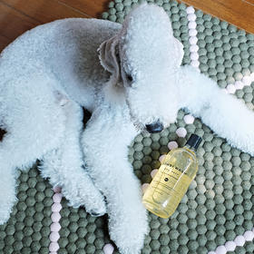 BONDI WASH-天然精油成分的宠物洗浴护理系列