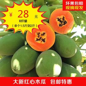红心木瓜 8斤装