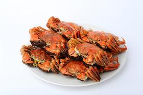 节日首选 盘锦全母河蟹 黄满膏肥 鲜美多汁 肉质鲜嫩 风味独特