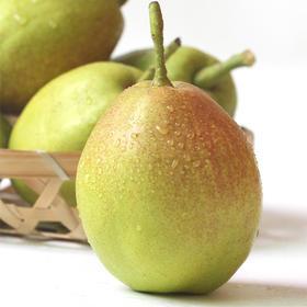 【全国地址包邮】新疆库尔勒一级香梨 礼盒装(20枚/盒,净重2-2.4kg,80%母梨,全国包邮)