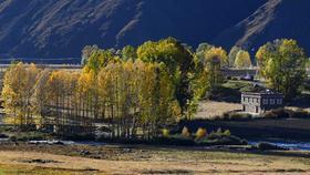 【大美黑稻】金秋红叶稻城亚丁观贡嘎丹巴藏寨、黑水彩林8日游