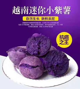 【网红爆品】越南进口 迷你小紫薯5斤包邮 香甜软糯 口感细腻