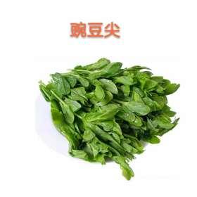 【果果生鲜】新鲜豌豆尖 一斤装