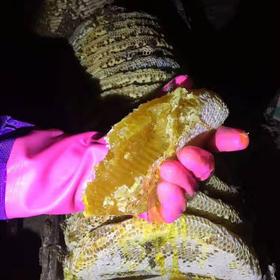 镇店之宝:一年取一次 甘肃深山土蜂蜜 500g