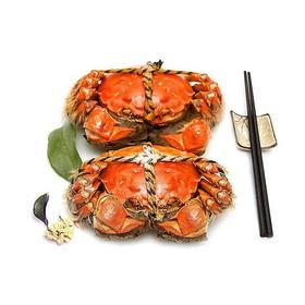 鲜活大闸蟹,固城河畔自然生长,次日达,香甜可口,膏多黄满。