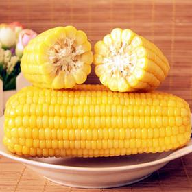 【限乌市地址!】塔城老玉米 速冻 黄糯/花糯任选(8根/件,净重3.5-4kg)