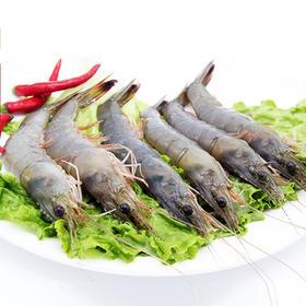 【东北生鲜】辽宁葫芦岛渤海湾野生对虾 500g