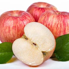 西安晚报推荐—陕西白水苹果果径75--85(7-8kg)【原产地直发】