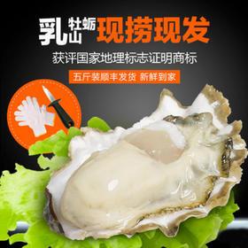 威海日报推荐—威海倍诺乳山牡蛎【原产地直发】