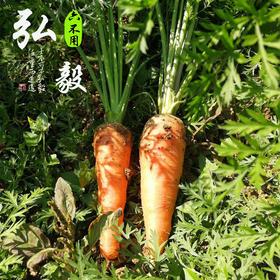【弘毅六不用生态农场】六不用新鲜胡萝卜 3斤/份