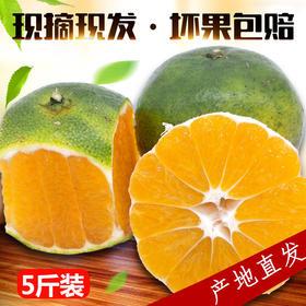 【美货】桔子 新鲜橘子 当季水果沅江蜜桔酸甜丑皮桔子柑橘现摘现发5斤装