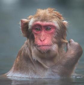 【动物摄影家踩线带队】御雪精灵  日本北海道-丹顶鹤-长野雪猴11天深度摄影团