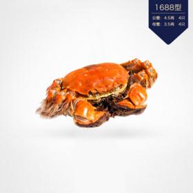 苏州太湖生态大闸蟹礼券 公蟹4.5两4只 母蟹3.5两4只 面值1688型
