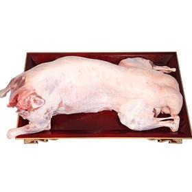【蒙羊羊】锡林郭勒全羊 馈赠亲友 送礼佳品 国家地标羊肉 25斤 包邮
