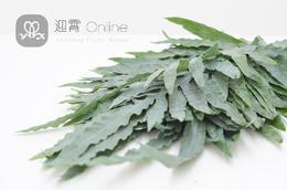贯众蕨 Greenery large leaf 10枝/扎 顺丰到付
