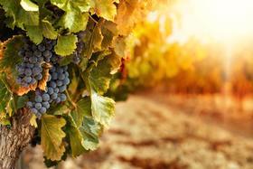【上海】11月13日 在米其林一星新荣记共赏精品佳酿,加州名家Ramey Wine Cellars高端晚宴