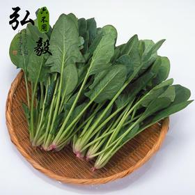 【弘毅六不用生态农场】六不用新鲜菠菜