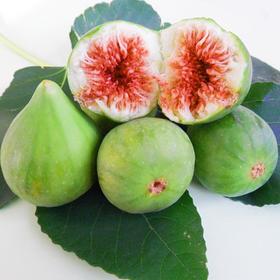 现货新鲜无花果山东威海特产青皮鲜果孕产妇时令现摘现发水果