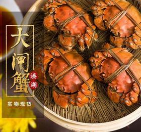 溱湖簖蟹8只礼盒装 新鲜鲜活  公母各半 蟹黄饱满 膏如白玉