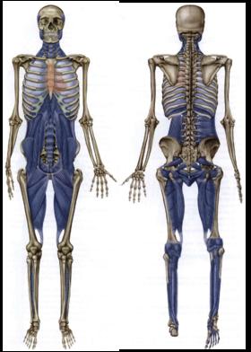 肌筋膜链康复课程 2018.4.8-14;7.1-7 北京