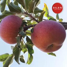 预售 霜降后的新疆阿克苏冰糖心苹果  不套袋