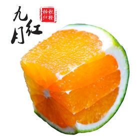 九月红秋橙  【三峡特产】秭归秋橙九月红!橙香满溢!汁多甘甜!口感鲜嫩!绿色有机