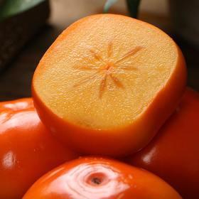 台湾富有脆柿子5斤装 包邮