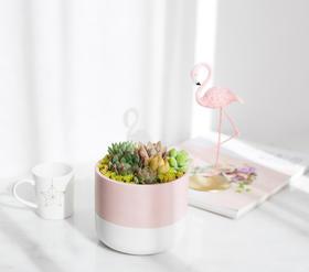 萌肉2.0系列专属花器,好女孩款 & 酷女孩款,满119元包邮