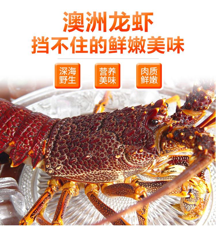 19澳洲龙虾_01.jpg