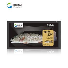 【仙泉湖】斑点尾鲈500g-600g*2包(仅限珠三角地区配送)