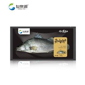【仙泉湖】尖吻鲈500g-600g*2包(仅限珠三角地区配送)