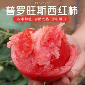 山东普罗旺斯西红柿 新鲜天然番茄白玉黄瓜三色小西红柿自然熟 农家水果孕妇包邮