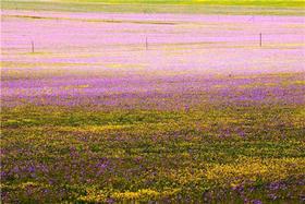 【单身专题-已结束】12.2相约长兴岛:徜徉花果天地,探寻深秋最后的神秘花海(1天)