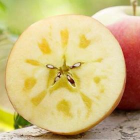 【第二批预售】正宗新疆阿克苏红旗坡苹果 十斤装  单果直径:80CM-85CM 果肉紧实细腻、酥脆爽口、汁多无渣