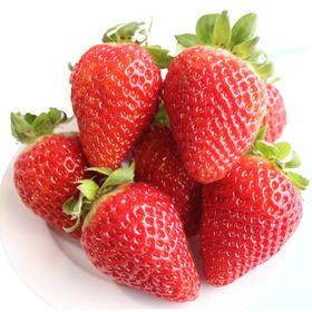 【限乌市地址!】四川双流巧克力冬草莓  香甜美味(300g*3盒,每盒含18-24枚左右)