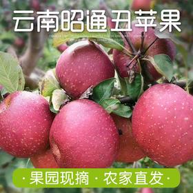 云南昭通丑苹果 2019新鲜苹果甜脆苹果 新鲜水果8斤装包邮