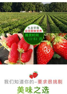 南岳中玲草莓预售