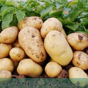 【美货】2017新货定西土豆农家特产新鲜马铃薯洋芋蔬菜黄心土豆5斤2500g包邮{爱心义卖}