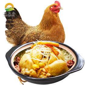 正宗农家竹林散养 土鸡 新鲜先杀散养老母鸡 顺丰包邮