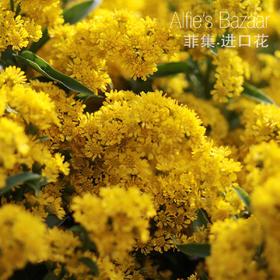 【菲集】厄瓜多尔农场直供 加拿大一枝黄花 花束配花 进口黄莺 鲜切花