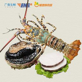 【进口生鲜】广食1888礼盒B套餐(澳洲鲍鱼 x1、澳洲大花龙x1、银鳕鱼精选中段扒x1)