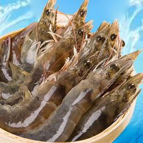 【限乌市地址!】沙特青虾 冷冻无冰(净重2kg/件)