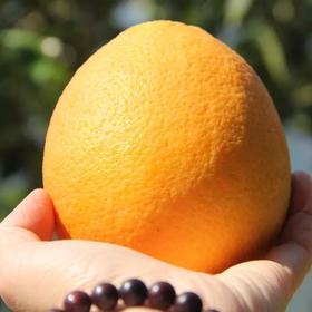 秭归长虹纽荷尔精品水果
