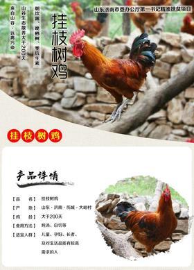 【醉山里】大峪村挂枝树鸡(散养200天以上)