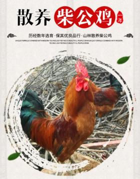 【北坡村】南山散养柴公鸡(一年)