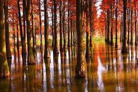 【单身专题-已结束】元旦1.1徒步探寻最美水上红杉林,逛上海最后的原生态古镇(1天活动)