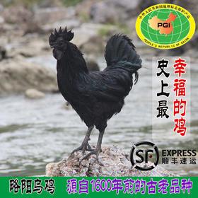 【略阳县】【略阳乌鸡】国家级贫困县/国家地理标志产品/239元1只/公鸡母鸡可选/快递直发