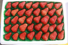 """正宗丹东""""绿色""""纯正99草莓 产地现摘现发 个大香甜"""