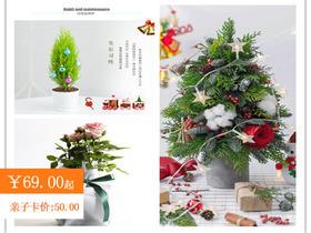 """""""我们的树""""圣诞树&玫瑰&香松  亲子圣诞主题DIY"""