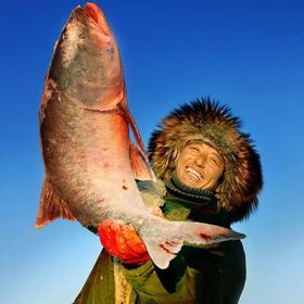 【冬季热销】东北吉林查干湖胖头鱼